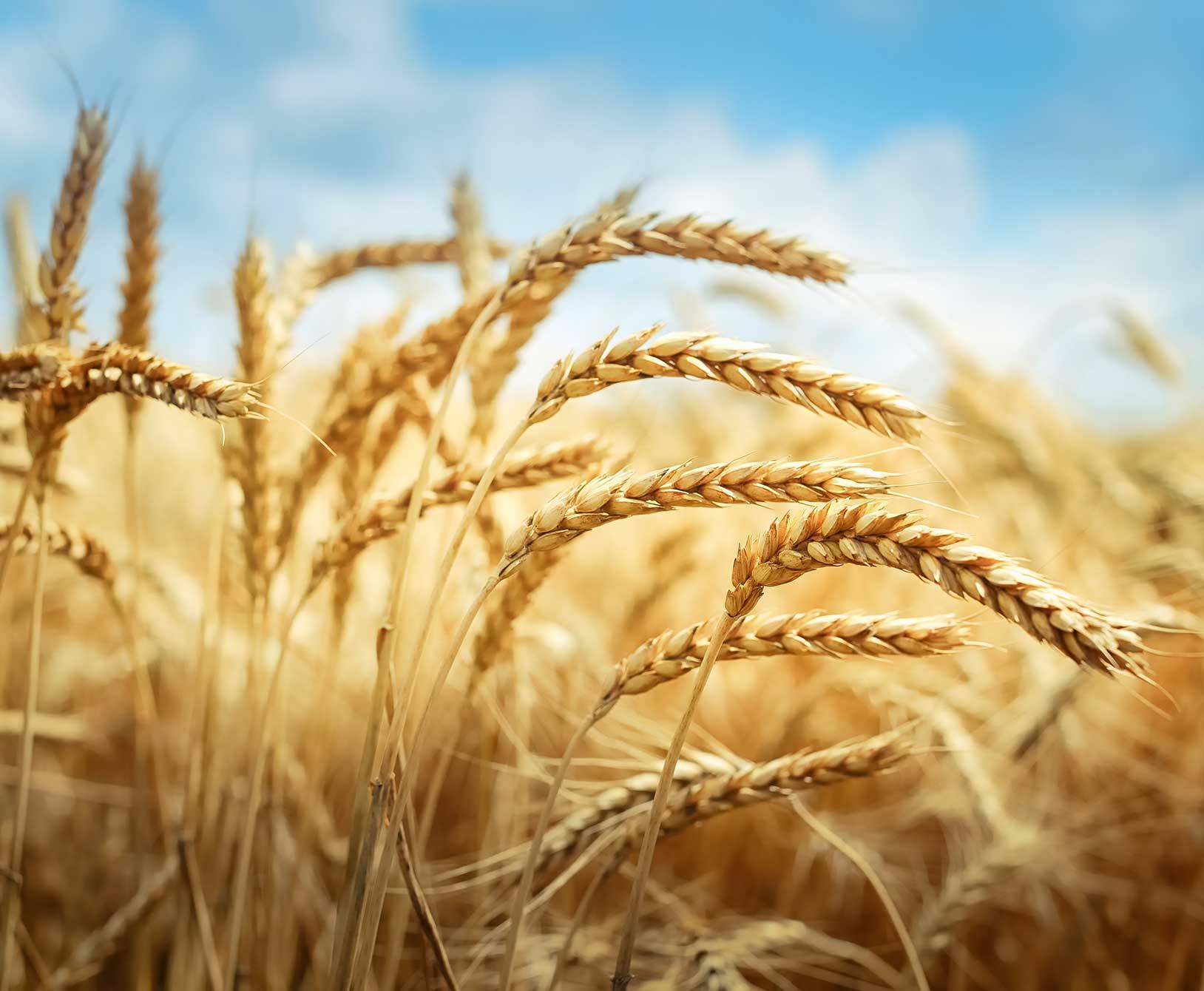 2021 Fertilizer Farm Fields