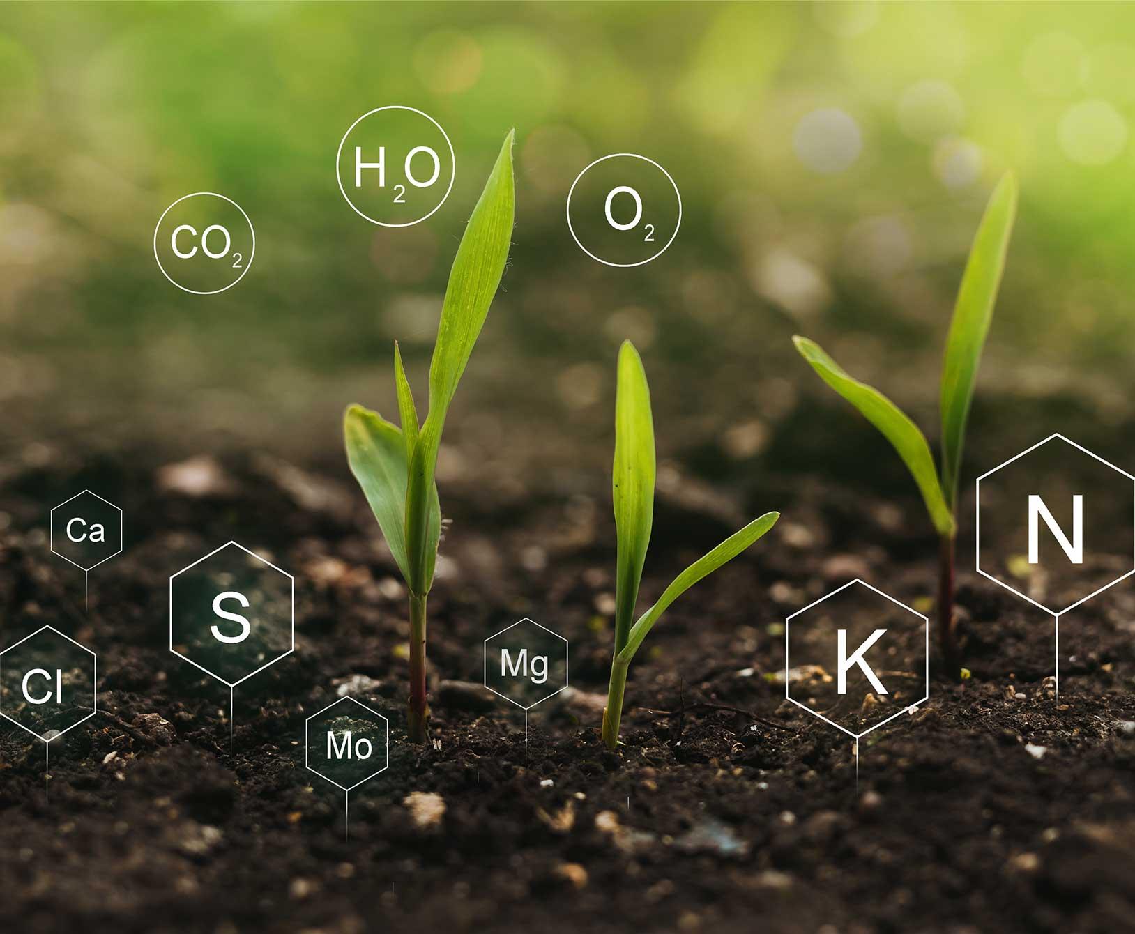 Turf Seed Nutrients