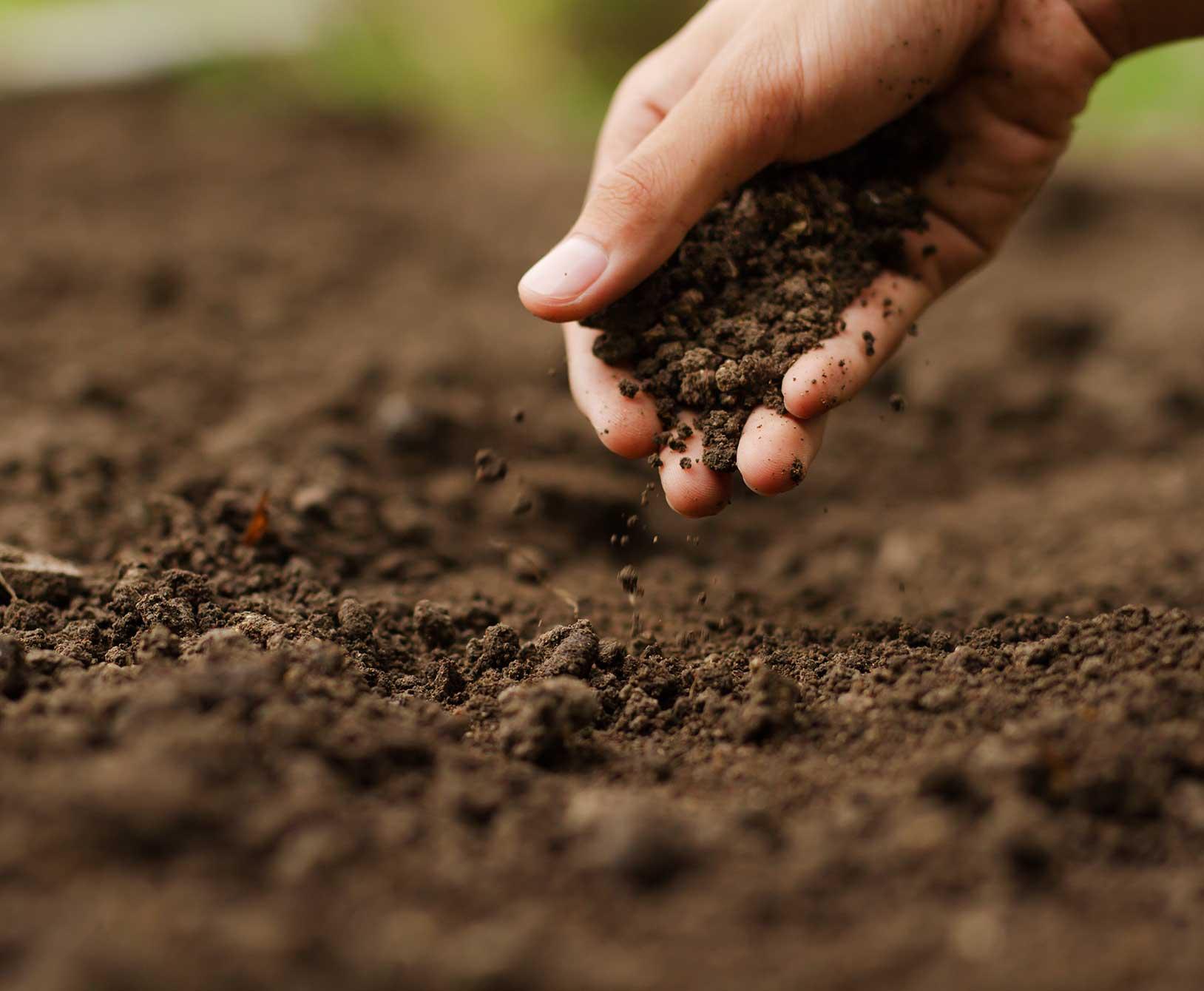 Fertilizers Soil Nutrition