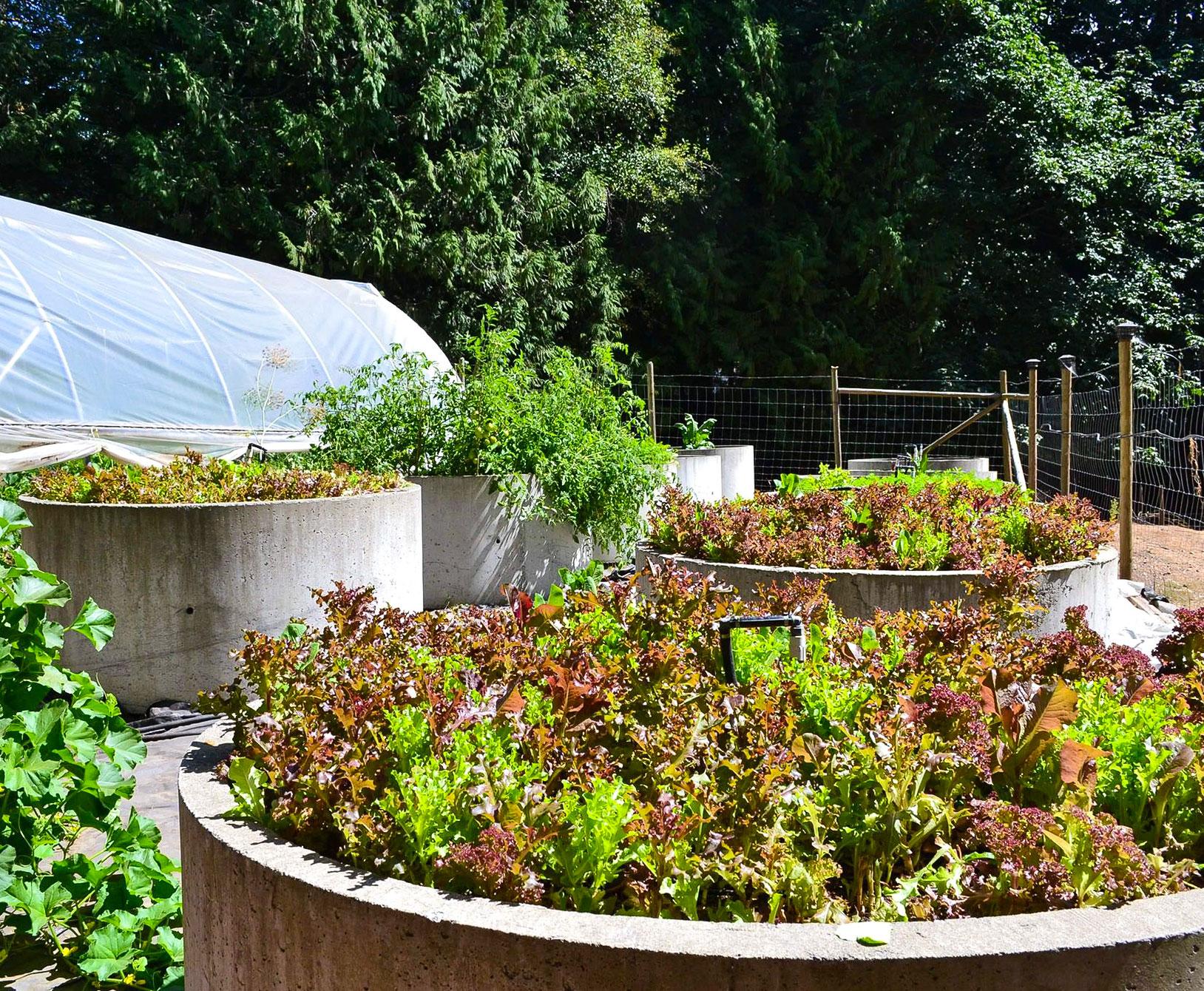 Farm Table Inn Featured Farm Garden